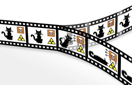 gato shrodinger efecto mandela, entre la memoria y la conciencia ID156745 - hermandadblanca.org