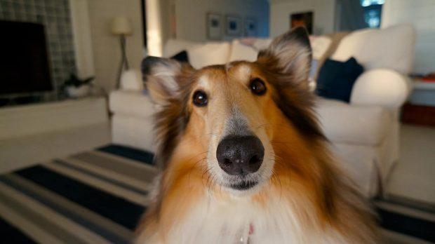 perro en entusiasmo existencial p1 entusiasmo existencial – parte 1 por roberto pérez – comentado p ID155281 - hermandadblanca.org