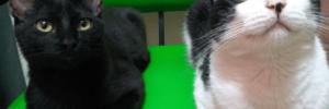 propiedades curativas de los gatos los gatos son protectores del hogar contra espíritus negativos y fant ID156533 - hermandadblanca.org