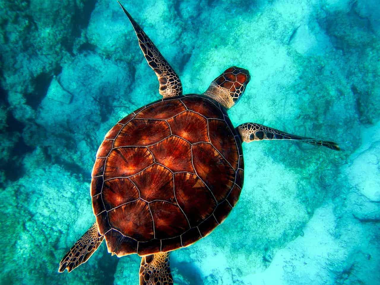 animal espiritual, la tortuga