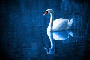 Arcángel Miguel: Hace Mucho Tiempo Te Di El Espejo Azul De La Verdad