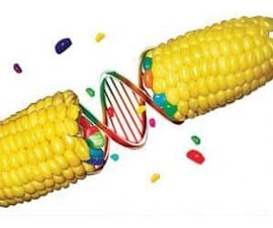 transgenicos cómo puede contribuir la biotecnología a la sostenibilidad ID157385 - hermandadblanca.org