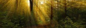 eres luz mensaje de jesús: acepta que eres luz ID159655 - hermandadblanca.org