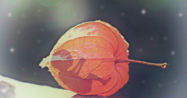 fetp dentro d euna hoja de arbol en duelo perinatal – parte 2 ID160389 - hermandadblanca.org