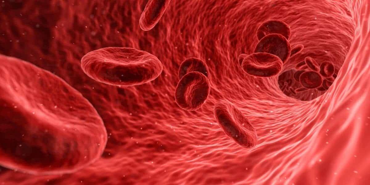 torrente sanguíneo