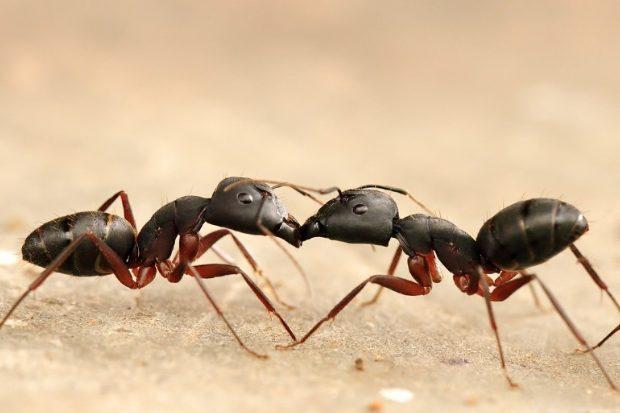 hormigas rituales de protección de la antigua mesopotamia: los namburbû ID160917 - hermandadblanca.org