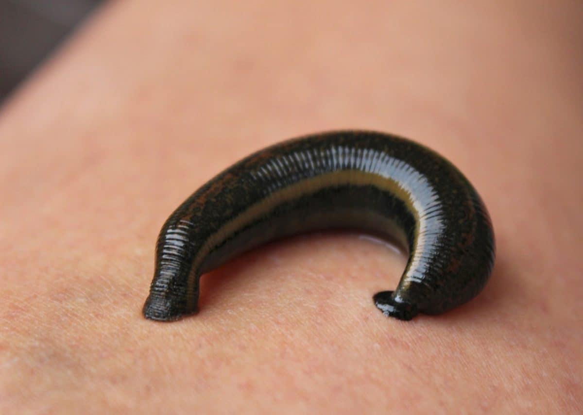 larvas astrales
