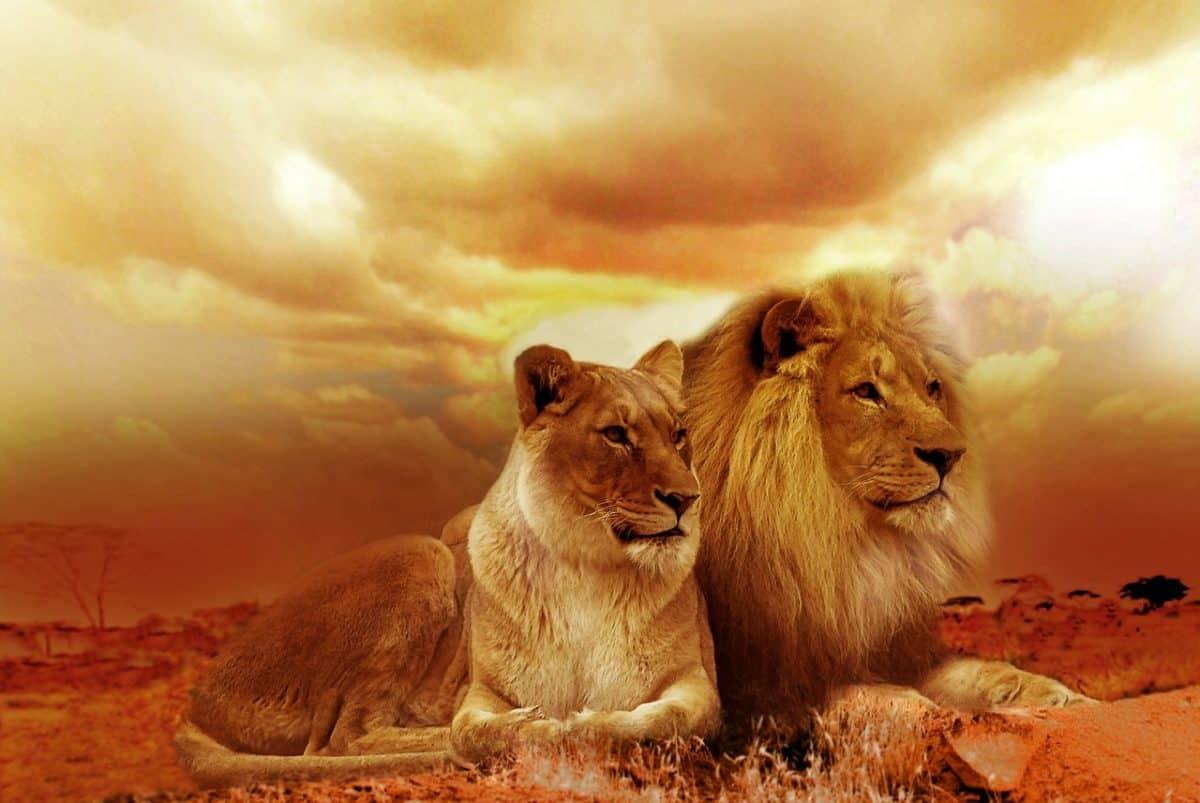lion 577104 1280 sentirse víctima y no saber cambiarlo ID164147 - hermandadblanca.org