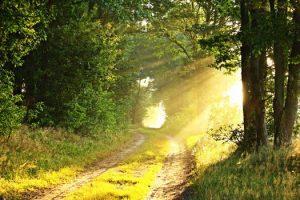 Codificación única del alma por los Pleyadianos – Parte 1
