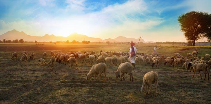 pexels photo 693776 lao tzu: sé un buen pastor de tu campo de energía ID160703 - hermandadblanca.org