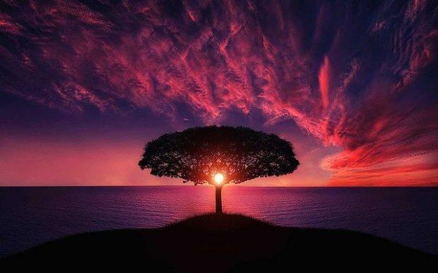 tree 736885 640 emanuel swedenborg: vida de un místico ID161241 - hermandadblanca.org