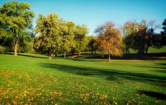trees grass lawn park arcángel gabriel: recuerden esculpir un espacio para sus seres sagrad ID162987 - hermandadblanca.org