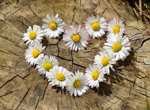 claves para un matrimonio feliz flores en forma de corazon claves para un matrimonio feliz. ID167085 - hermandadblanca.org