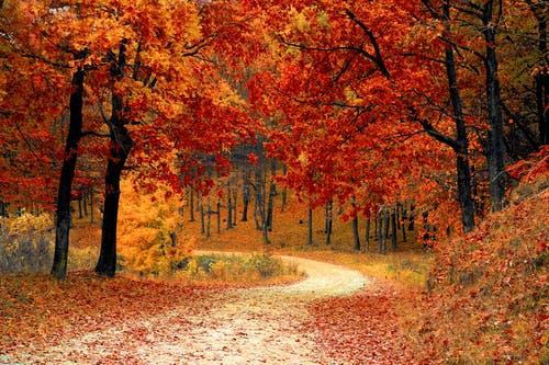 fall autumn red season–ID169006 - hermandadblanca.org