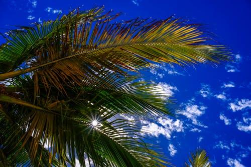 pexels photo 273704 arcángel miguel: ¡la luz y el amor han ganado, queridos! ID167119 - hermandadblanca.org