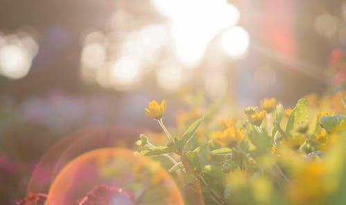 pexels photo 917076 lao tzu: véanse a sí mismos como el sol más luminoso que brilla dí ID167101 - hermandadblanca.org