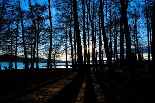 pexels photo 97246 arcángel miguel: ¡la luz y el amor han ganado, queridos! ID167119 - hermandadblanca.org
