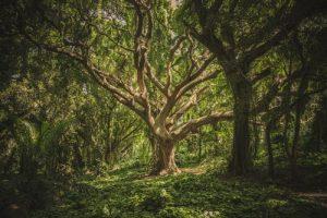 Madre Tierra: Intercambio de conciencia con los espíritus de los árboles