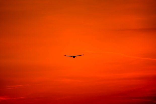como ser un buen lider de familia ave volando en el medio del cielo ¿como ser un buen líder de familia? ID170946 - hermandadblanca.org