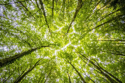 forest trees perspective bright 957024 arcángel uriel: tú y todos nosotros estamos entrando en la siguiente ID169504 - hermandadblanca.org