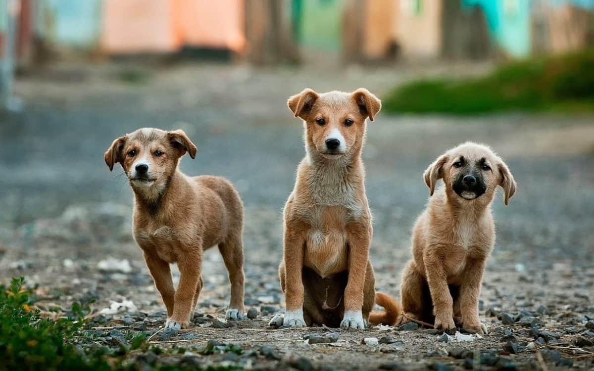 funcion espiritual de tu perro ¿sabes la función espiritual de tu perro? poderes energéticos de lo ID169934 - hermandadblanca.org