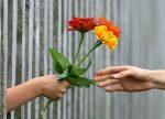 ley del dar y recibir recibe exito abundancia y prosperidad ley del dar ¡recibe Éxito, abundancia y prosperidad! ID170658 - hermandadblanca.org