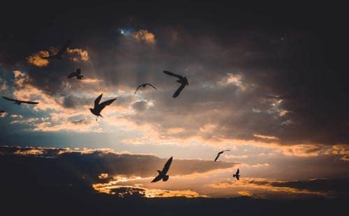pexels photo 721993 señor ganesha: el amor es verdad y ¡la verdad es libertad! ID169804 - hermandadblanca.org