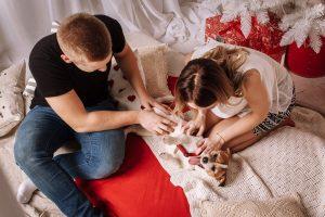 ¿Sabes la Función Espiritual de tu Perro? Poderes Energéticos de los Perros