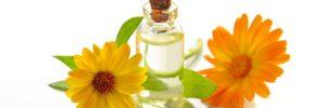 las plantas regeneradoras de piel esta es famosa por ser un poderoso antiinflamatorio .plantas regeneradoras de piel, ¡te serán de mucha ayuda! ID172982 - hermandadblanca.org