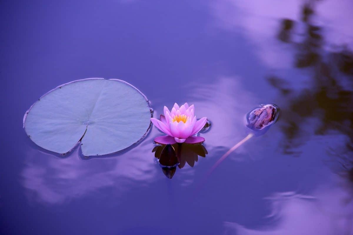 ley del menor esfuerzo cuarta ley espiritual del exito ley del menor esfuerzo, cuarta ley espiritual del Éxito ID171580 - hermandadblanca.org
