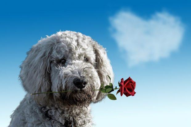 perrito con flor en la boca en como puedo mejorar la relacion con mis hijos ¿cómo puedo mejorar la relación con mis hijos? ID172658 - hermandadblanca.org