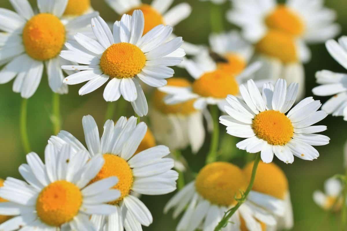 plantas regeneradoras de piel .plantas regeneradoras de piel, ¡te serán de mucha ayuda! ID172982 - hermandadblanca.org