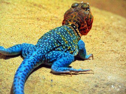salamandras mensaje de las salamandras de fuego y del nuevo colectivo gaia ID172722 - hermandadblanca.org