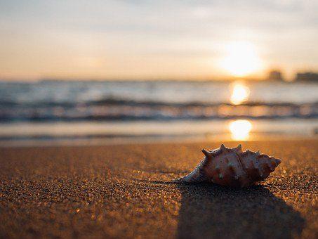 shell 1031290 340 quan yin: ten piedad y compasión de ti mismo ID171910 - hermandadblanca.org