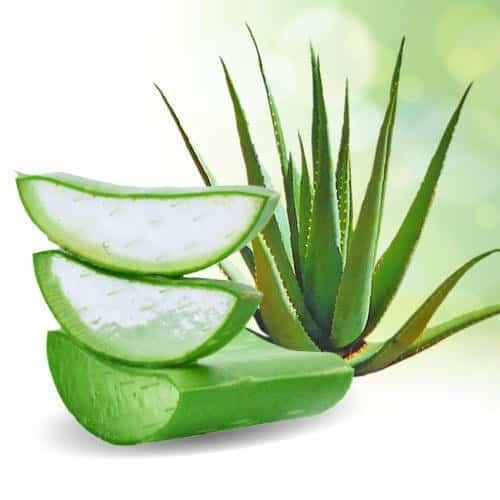 12 plantas medicinales aloe vera 12 plantas medicinales que no pueden faltar en tu casa, ¡son extraord ID174283 - hermandadblanca.org