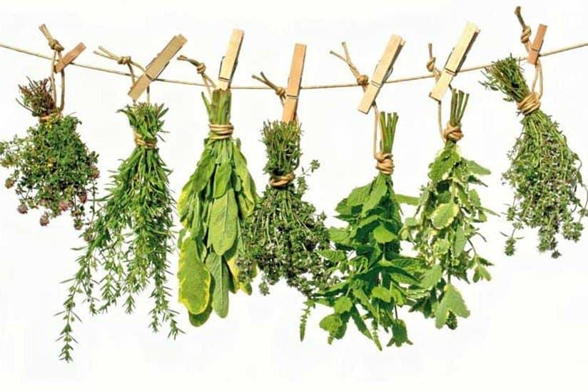 12 plantas medicinales que no pueden faltar en tu casa 12 plantas medicinales que no pueden faltar en tu casa, ¡son extraord ID174283 - hermandadblanca.org