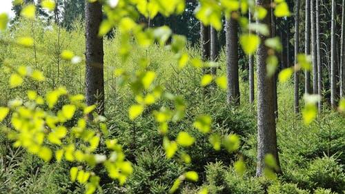 pexels photo 414798 arcángel uriel: ¡camina conmigo hacia el futuro! ID173594 - hermandadblanca.org