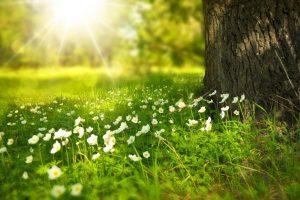 Saúl dice: «Encontrarán la paz y la autoaceptación en cuanto el Amor que son se despierte en sus conciencias», Parte 2