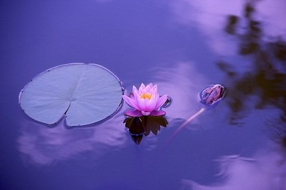 lotus 1205631 960 720 mensaje del arcángel miguel: sigan la meditación de las hermanas del ID176053 - hermandadblanca.org