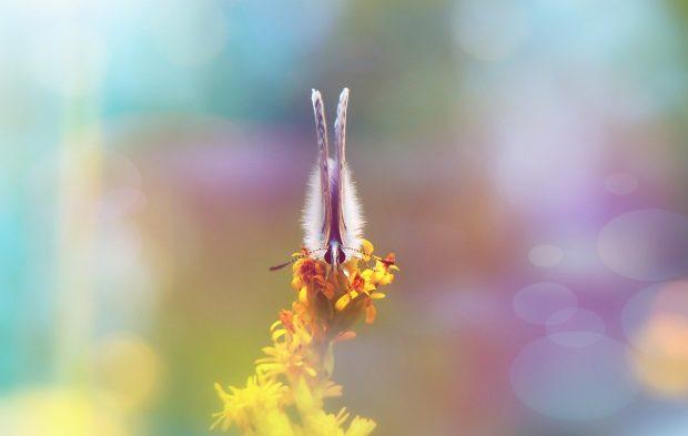 polyommatus icarus 4135778 1280 ¿en medio de una crisis? acá te contamos como salir aireoso y victor ID176569 - hermandadblanca.org