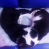 son los gatos protectores espirituales ¿los gatos protegen tu salud?, ¿son los gatos protectores espiritual ID175635 - hermandadblanca.org