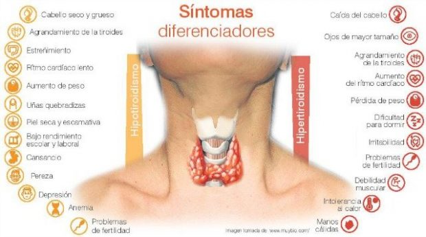 tiroides cómo relacionar el centro laríngeo con el tercer rayo ID175353 - hermandadblanca.org