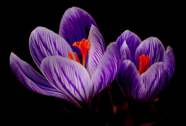 color violeta ¿qué significa el color violeta en el aura? ID204195 - hermandadblanca.org