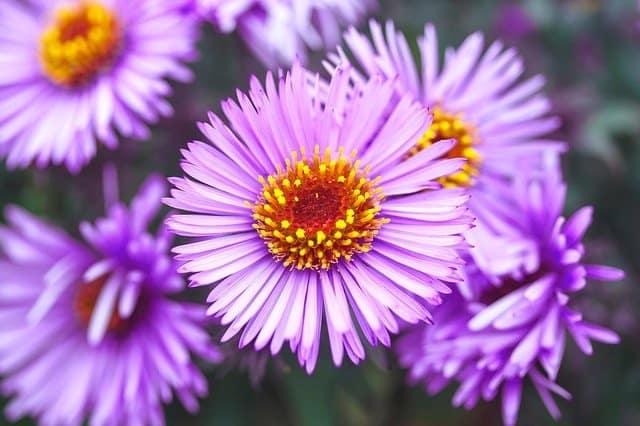 color violeta en el aura ¿qué significa el color violeta en el aura? ID204195 - hermandadblanca.org