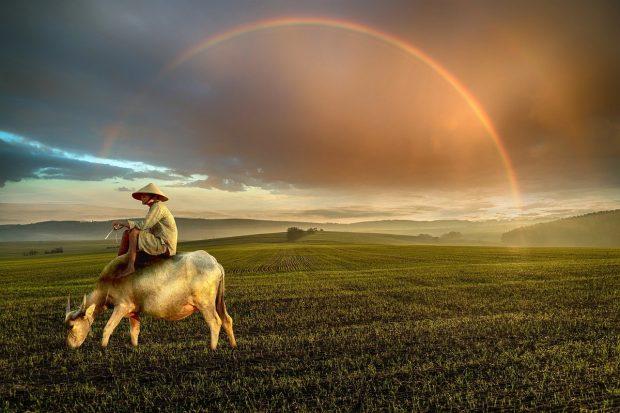 hombre gaucho sobre su caballo en como hacemos para soltar o borrar lo que ya no nos sirve ¿como hacemos para soltar o borrar lo que ya no nos sirve? ID203803 - hermandadblanca.org