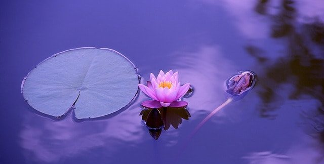 la espiritualidad sabes ¿qué es y cómo cultivar la espiritualidad?, ¡cultívala a pa ID203069 - hermandadblanca.org