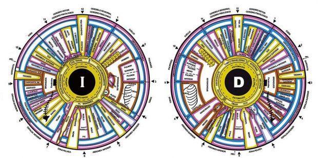 mapa del iris cómo relacionar el centro ajna con el segundo rayo ID199077 - hermandadblanca.org