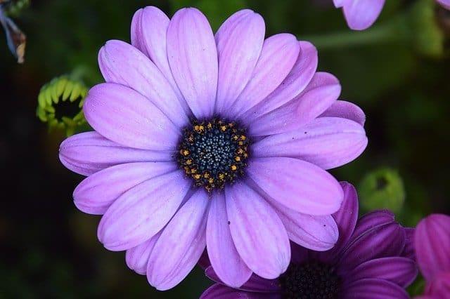 personas con aura color violeta ¿qué significa el color violeta en el aura? ID204195 - hermandadblanca.org