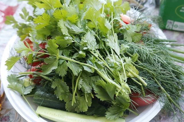 plantas 11 beneficios del perejil para una mejor salud, ¡menos enfermedades y ID185679 - hermandadblanca.org