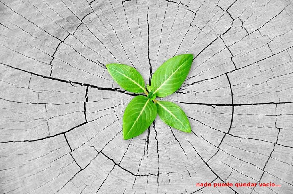 planta y tronco - sanar y ser sanados ID203813 - hermandadblanca.org